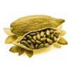 The Golden Seeds of Quetzalcoatl